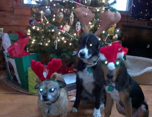 2011-12-20_puppy_christmas