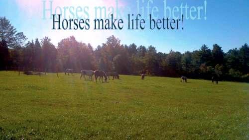 Horses_make_life_better