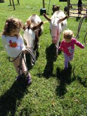 4 Helping walk the donkeys back to the barn