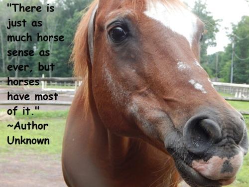 Casey horse sense