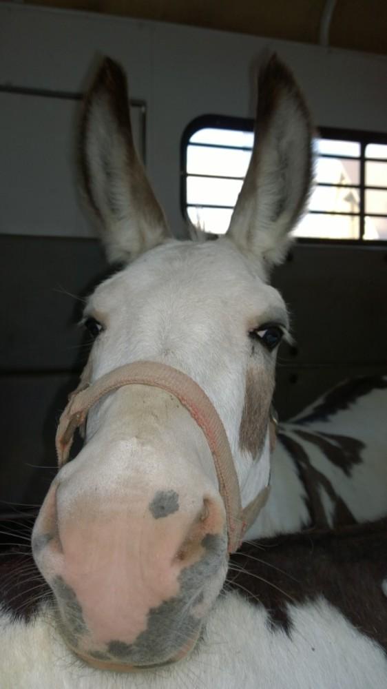 Good Bye Sweet Donkeys (3/6)