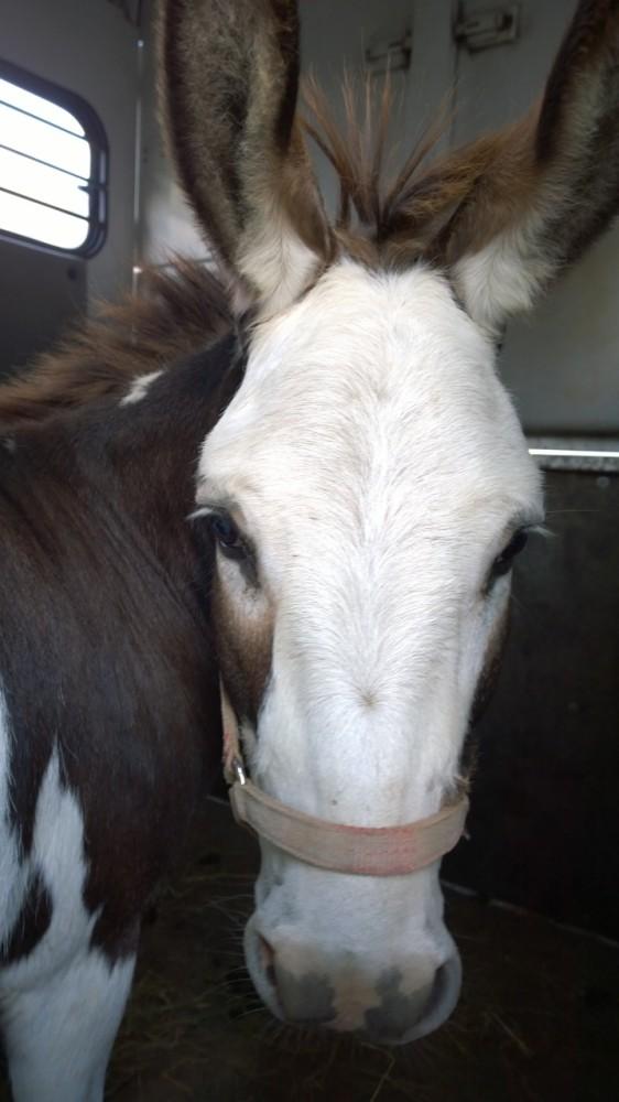 Good Bye Sweet Donkeys (4/6)